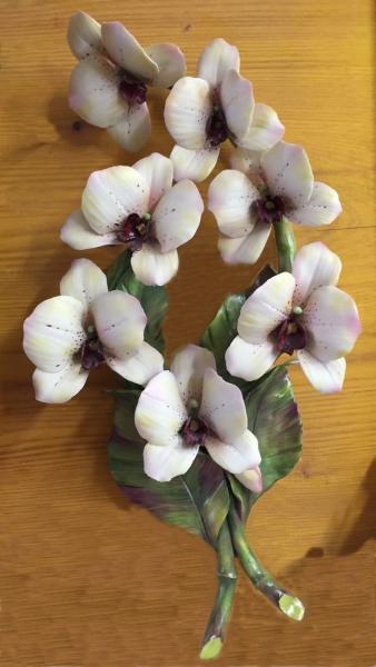 ferri-ferruccio-capodimonte-orchidea